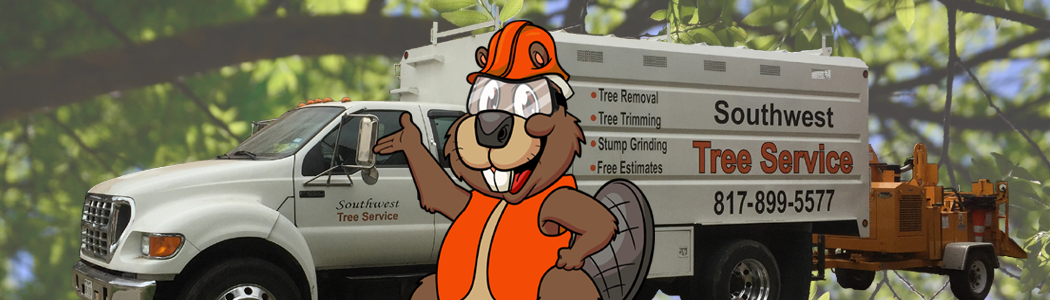 Tree Trimming,Tree Removal,Tree Service