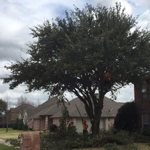 Tree Trimming Residential