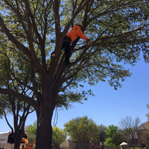 Tree Trimming Commercial: Southwest Tree Service