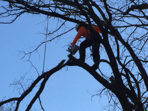 tree removal1 1024